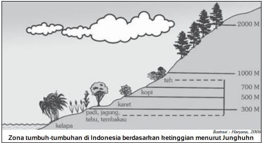 Zona tumbuh-tumbuhan di Indonesia berdasarkan ketinggian menurut Fr. Junghuhn