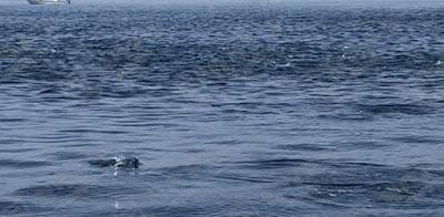 ポータボートレビュー 2020/4/28の釣果 ナブラ発生