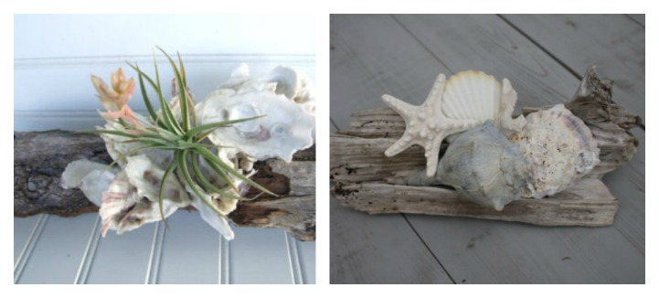 Coastal driftwood and shells