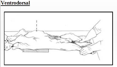 Radiologi Thoraks pada Hewan