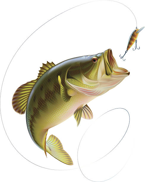 Bass Fishing Techniques – Revealed