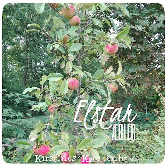 elstar æbler