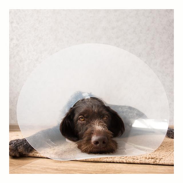 Beterschap Hond | Honden cadeau |  Brievenbus cadeau