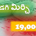 BYADGI CHILLI RATE | RED CHILLI RATE TODAY