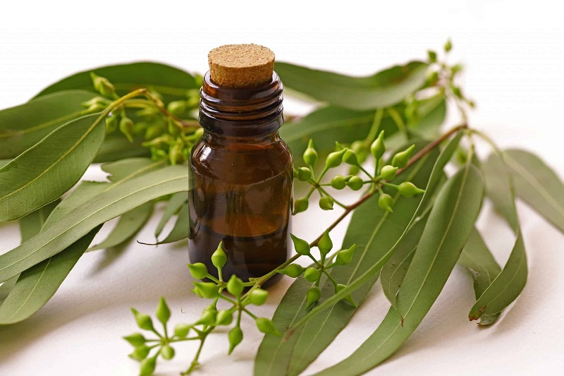 24 Benefícios do Óleo de Eucalipto Para a Saúde e Beleza - Seus Usos e Efeitos Colaterais
