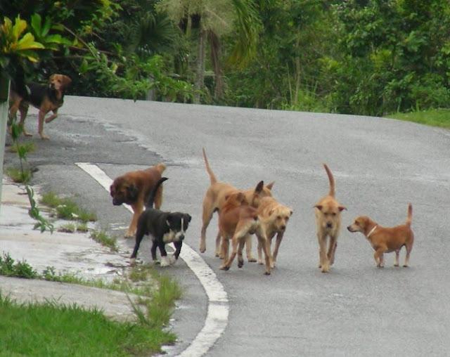 Γιατί δεν πρέπει να ταίζουμε αδέσποτα σκυλιά στο πεζοδρόμιο και σε πυλωτές πολυκατοικιών
