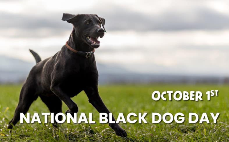 National Black Dog Day Wishes pics free download