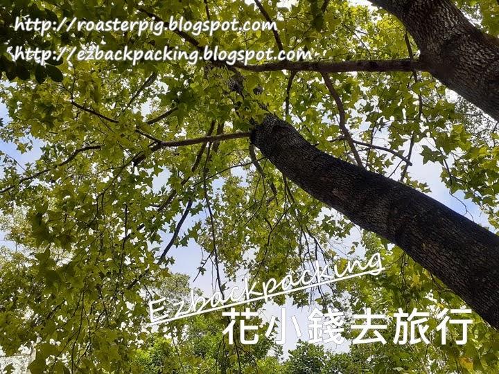 西貢蕉坑自然教育中心紅葉