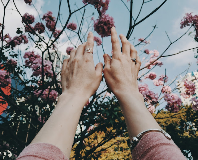 A pair of hands reaching out to touch pink flowers.