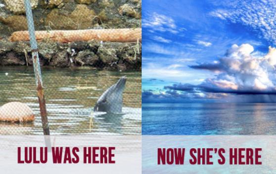 Lulu o golfinho