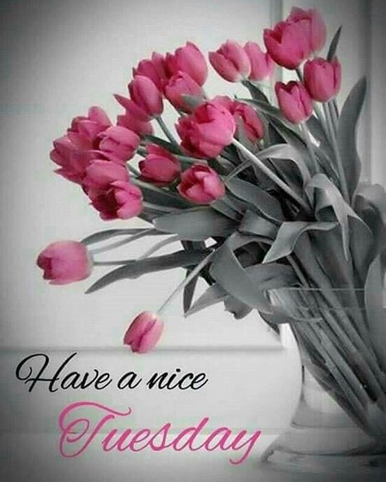 Happy Tuesday Good Morning Flowers Wishes