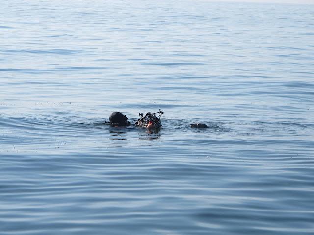 Koko kuva on veden pintaa, jossa näkyy sukeltajan ja hylkeen päät. Sukeltajalla on kamera naaman edessä, jolla hän kuvaa hyljettä.