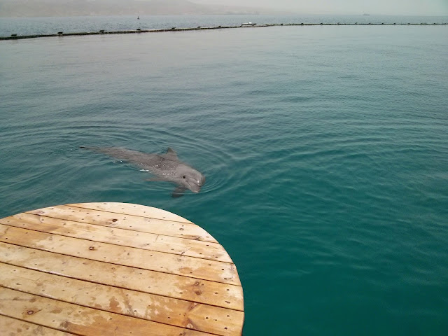 ריף הדולפינים באילת