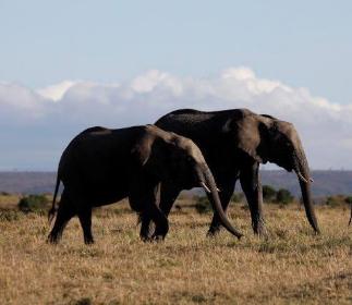 سياحة كينيا