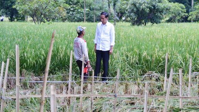 Jokowi Minta Anak Muda Tak Usah Malu-malu Jadi Petani