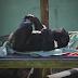 Animais do Zoo Pomerode recebem cuidados extras para amenizar o frio - CURTA BLUMENAU