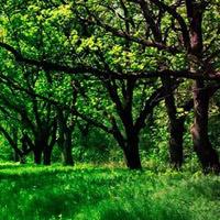 BigEscapeGames-Nature For…