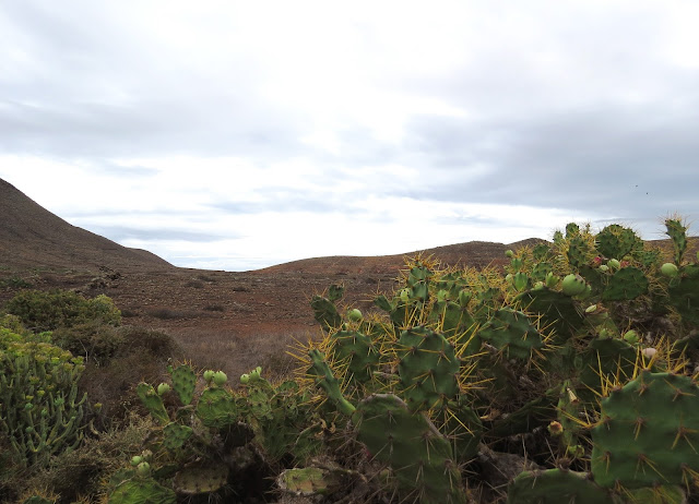 Mareta de Fimapaire - Fuerteventura
