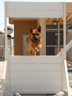 Discover How To Train Your Dog and Help Her Become a Better Pet