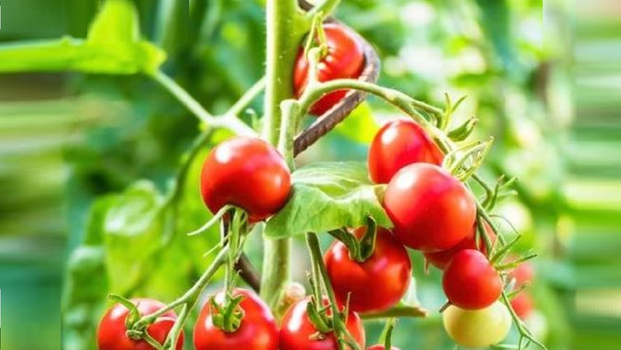 Plants will be healthy with nano particle technology
