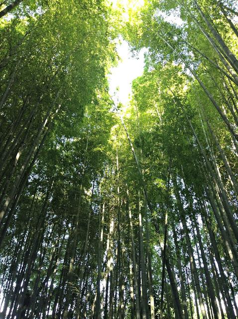 Templo de Bambú de Kamakura
