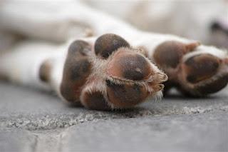 metacarpo dos cães