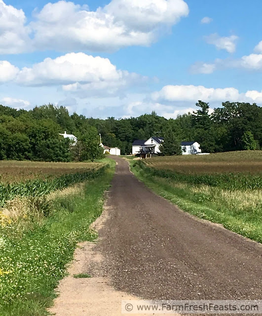 looking down a lane to a farm surrounded by corn fields and woods