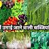 बरसात में उगाई जाने वाली सब्जियों की पूरी जानकारी