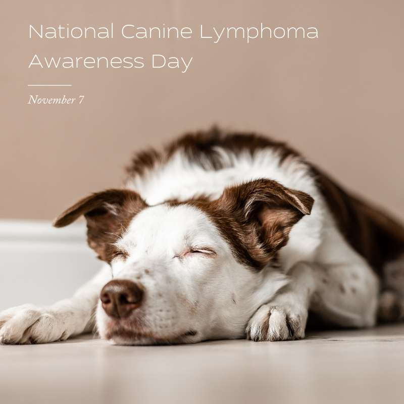 National Canine Lymphoma Awareness Day Wishes Awesome Picture