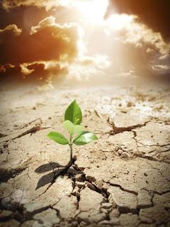 Planta nascendo na terra seca