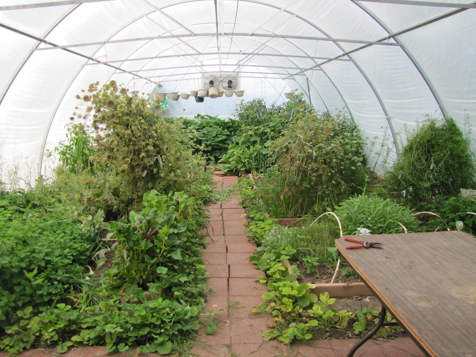 Buckets of Gardening Ideas: Year Round Greenhouse Gardening