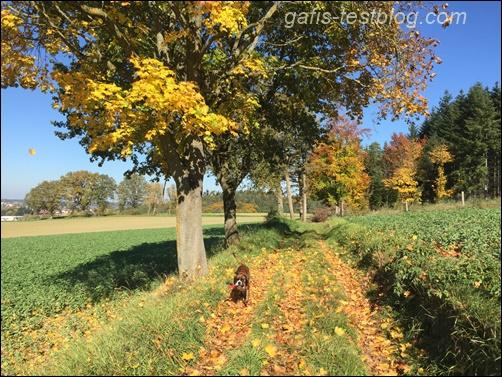 Herbstlandschaft im Sonnenschein