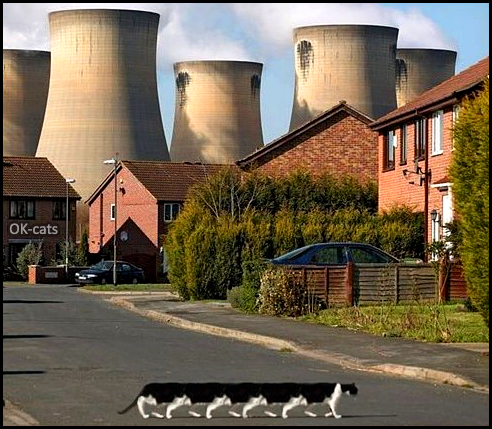 Photoshopped Cat picture • Meanwhile, near a nuclear power plant, a mutant cat with 12 legs...