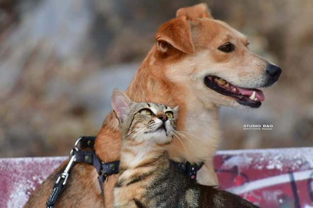 Δυο διαφορετικοί, αλλά αχώριστοι φίλοι στο Ναύπλιο