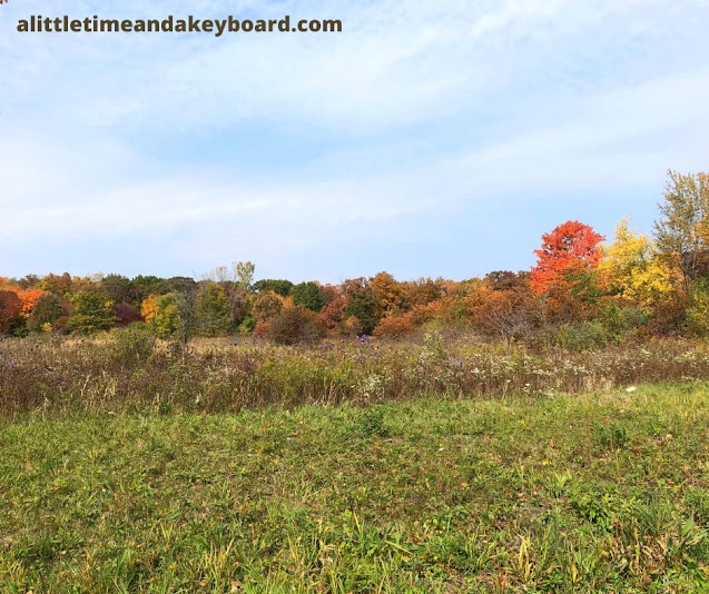 Fall colors painted an interesting tableau across Moraine Hills State Park.