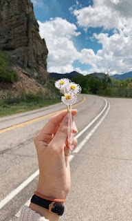 زهور على الطريق