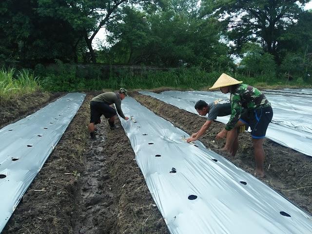 Korem 081/DSJ Siap Olah Lahan Tidur Menjadi Lahan Pertanian