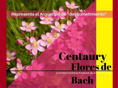 Centaury, Flores de Bach indicado para las personas que sufren de Sometimiento y falta de voluntad