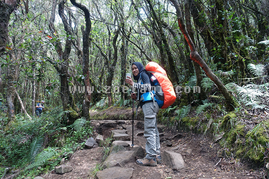 Info Harga Simaksi Gunung Gede Pangrango