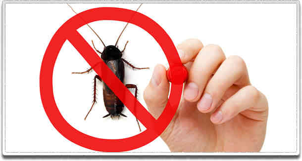How to Get Rid from Pest and Insect