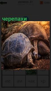 1100 слов две черепахи по земле ползут навстречу друг к другу 31 уровень
