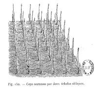 Vigne et vendange d'Auvergne.