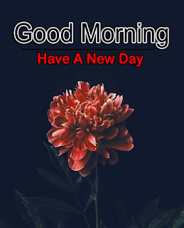 New Good Morning 4k Full HD Images Download For Daily%2B58