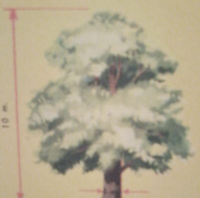 Dibujo de un castaño con sus medidas. 1 metro de ancho y 10 de altura.