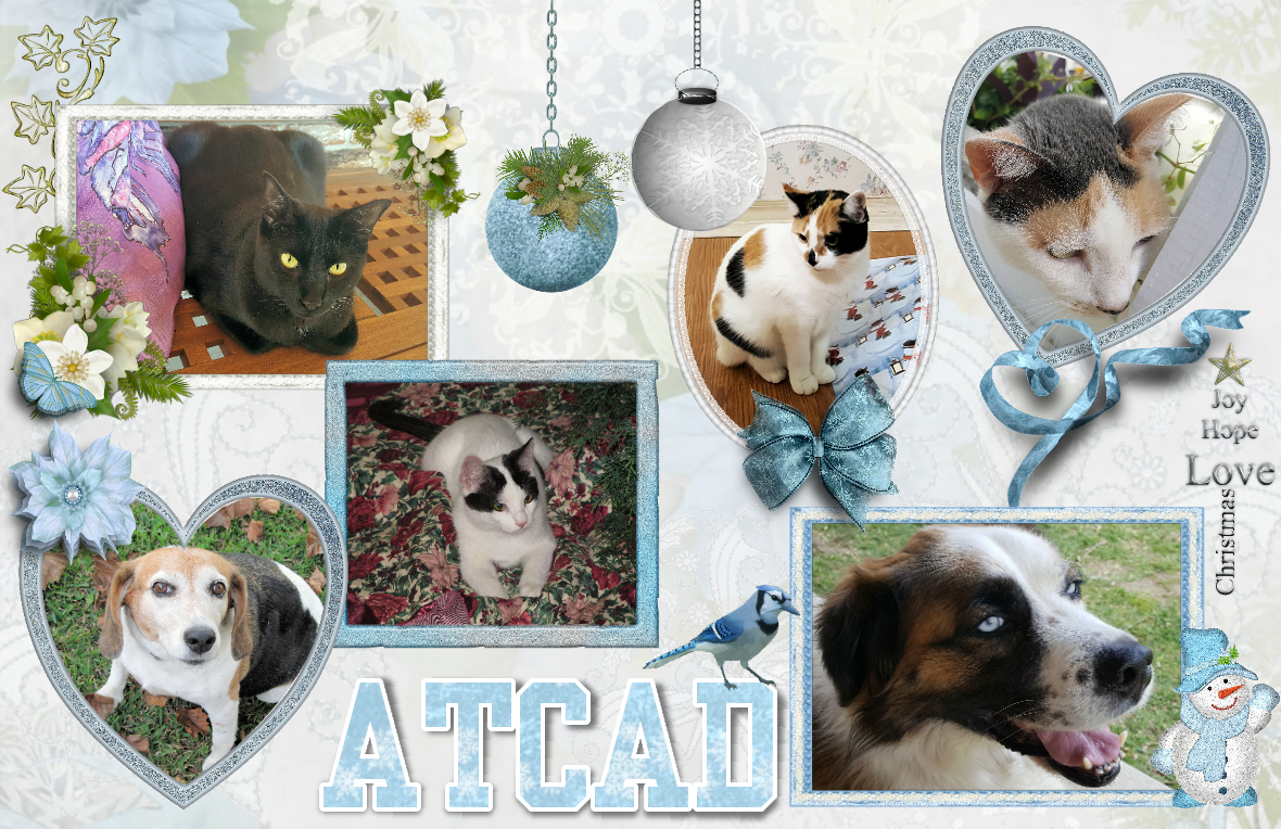 Alasandra, The Cats & Dogs