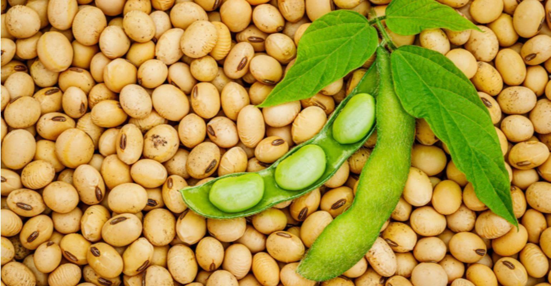 Produtos do agronegócio registram recorde nas exportações de maio