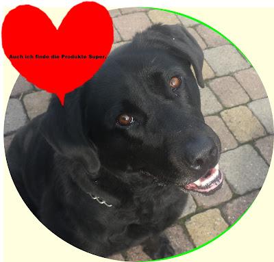 Angel ein Schwarzer Labrador
