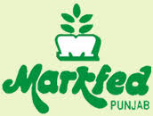 markfed-punjab-recruitment-career-notification-latest-apply-govt-jobs-vacancy