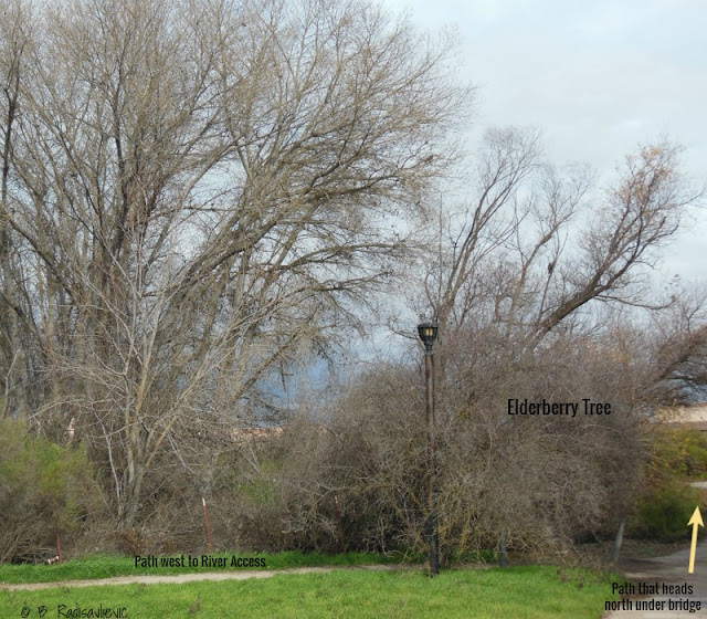 """Larry"" Moore Park in Paso Robles: A Photographic Review - Trail Intersection"