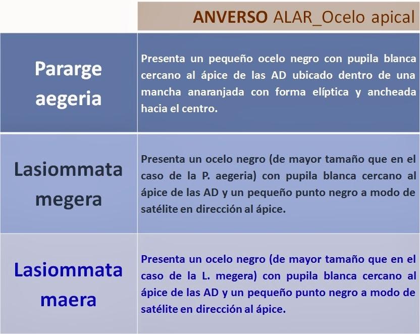 Ocelo Pararge aegeria, Lasiommata megera y Lasiommata maera